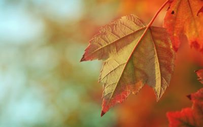CELEBRATING THE SCENTS OF AUTUMN